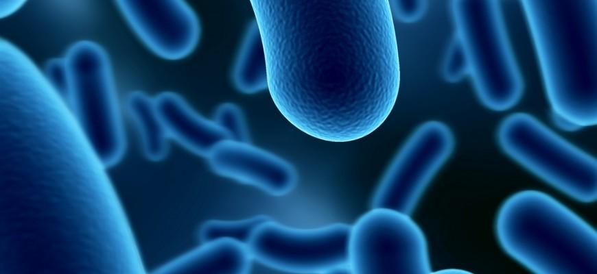 Microbiome Bg